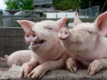 太仓人才网谈幸福、国家、职场和猪